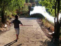 El Ayuntamiento constata una reducción de la plaga de mosquitos en el mes de agosto