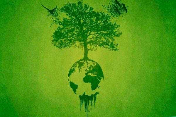 bosque-sentidnos-2021
